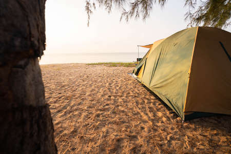 Tourist tents under the pine trees in the morning, travel the sea on vacation.