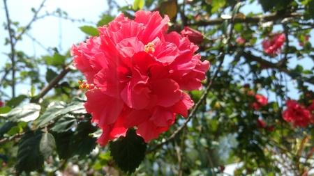beautifull: Beautifull Flowers