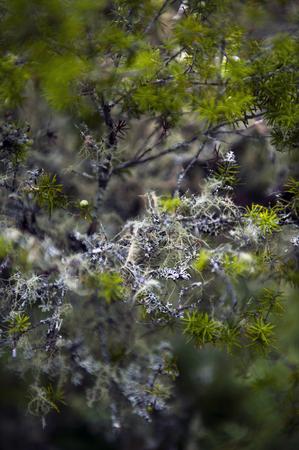 Lichen on a Branch Stock Photo