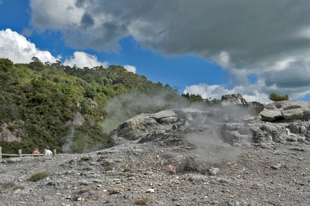 Whakarewarewa Geyser at Te Pui thermal park in geothermal valley of Rotorua, New Zealand