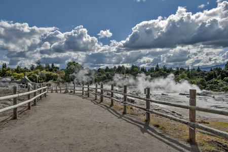 Whakarewarewa Geyser at Te Pui thermal park in geothermal valley of Rotorua, New Zealand