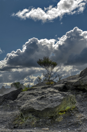 Whakarewarewa Geyser under cloudy sky at Te Pui thermal park in geothermal valley of Rotorua, New Zealand