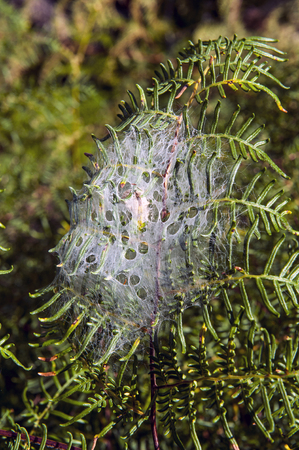 screen savers: Spider net covers fern leaves in the forest of New Zealand