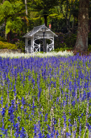 Lavender flowers at Wellington Botanic Garden, the largest public park in capital city of New Zealand
