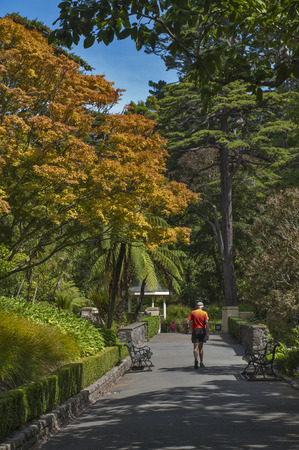 newzealand: Wellington, New Zealand - March 2, 2016: Visitors resting at Wellington Botanic Garden, the largest public park in town Editorial