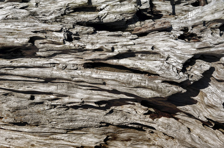 falling tide: Driftwood background Stock Photo