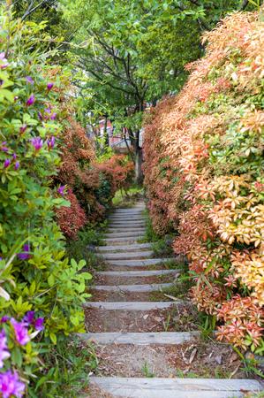 Narrow walkway in lush colorful garden