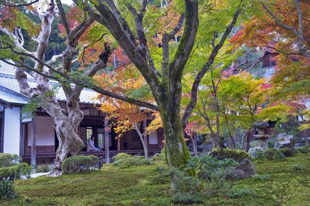 Japanse rode esdoornboom tijdens de herfst in tuin bij Enkoji tempel in Kyoto, Japan