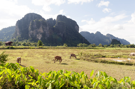 Limestone mountains in Vang Vieng, popular tourist resort town in Lao PDR.