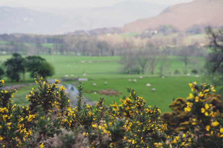 Countryside landscape at a sheep farm in Lake District of England, United Kingdom Фото со стока