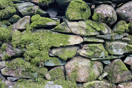 Pattern and texture background of old stone wall covered with clumps of green moss Stock Photo