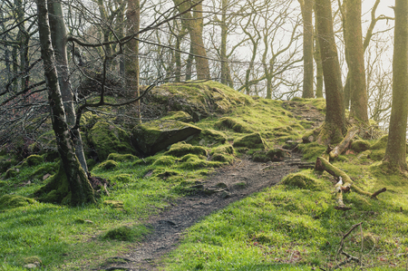 Clumps of moss on stones and trees at White Moss Walks, scenic forest recreational area in Ambleside, Lake District National Park in South Lakeland, England, UK
