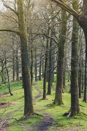 White Moss Walks, scenic forest recreational area by River Rothay in Ambleside, Lake District National Park in South Lakeland, England, UK Stock Photo