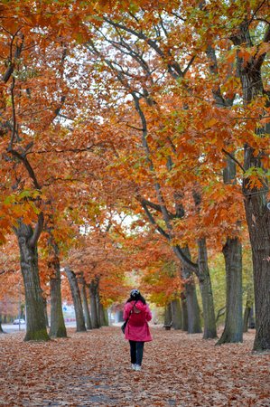 Woman walking among colorful red and yellow foliage trees in garden during autumn at Wilhelm Külz Park in city of Leipzig, Germany