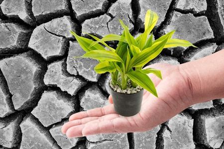 plead: Man hand holding with green plants in the small pots on Black and white cracks in the dried soil in arid season Stock Photo