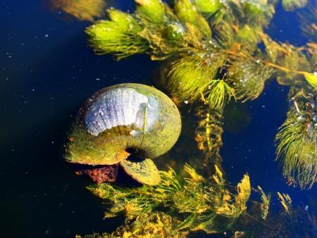 innate: Lumaca nella Pubblica lagune