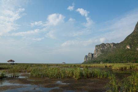 Lotus ponds in National park Sam-Roi-Yot Prachuap Khiri Khan Province.