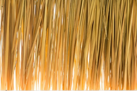 Brown bulrush is weave line form natural