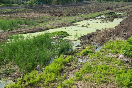 vacant land: Vacant land grass and pond