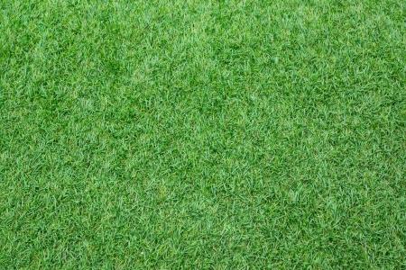 pasto sintetico: El césped artificial césped Vista superior de campo