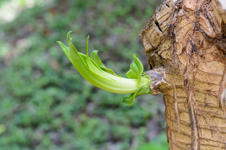 New budding green leaf on branch on tree top