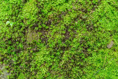 Close up green moss on the stone backdrop Stock Photo