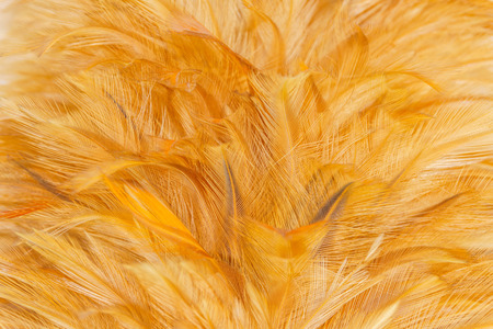Closeup soft feather texture detail background or backdrop