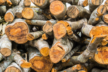 Stack of firewood, Renewable resource of a energy Stock Photo