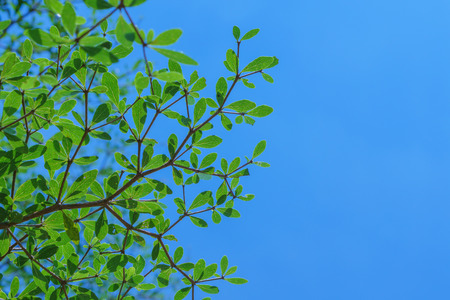 sky background: Green leaf with blue sky background Stock Photo