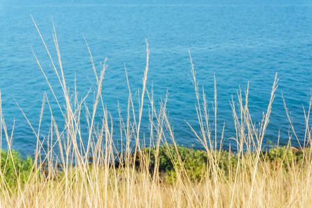 dry grass on the coast of blue sea and movement with the wind