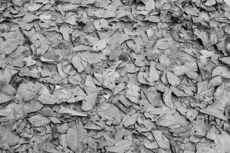 Dry leaves on ground, background or backdrop