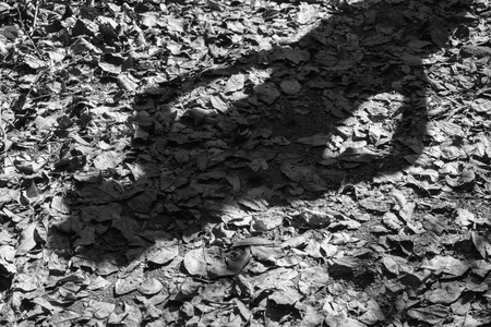 black shadow: shadow of women contrast standing on ground and dry leaf