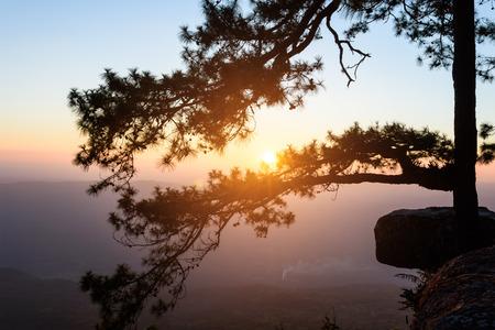 kradueng: Sunset in the evening silhouette scene at Pha Lom sak on Phu Kradueng National Park, Loei Province