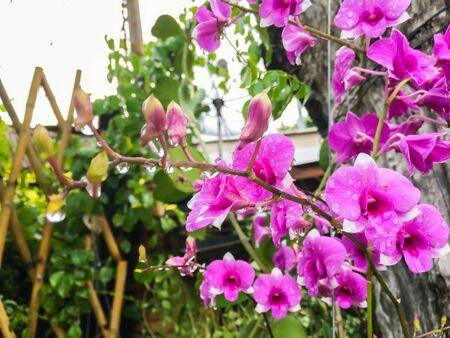 Beautiful purple orchid flowers in the background garden