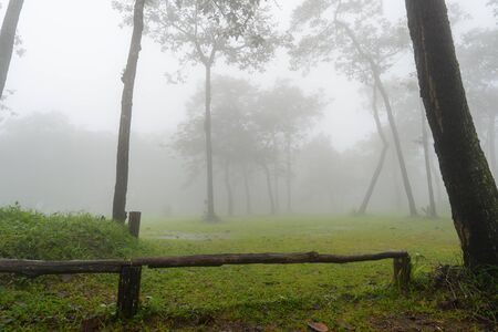 Fog in the forest on Sai Thong National Park, 