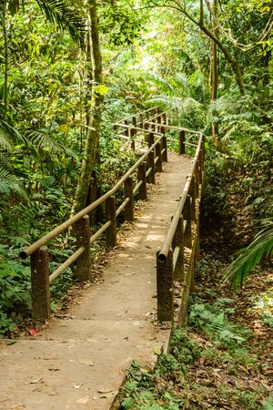 walkway in  tropical forest outdoors, Thailand