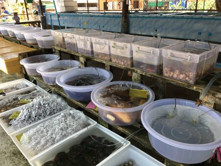 Rayong, Thailand - February 26 : Fresh seafood at Ban Phe local market on February 26, 2019 in local market, Rayong, Thailand Editorial