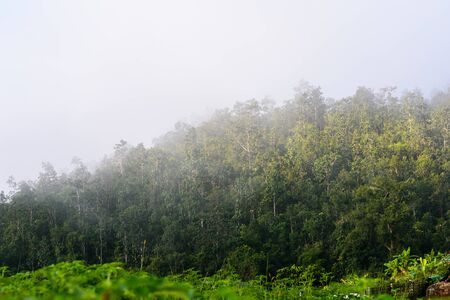 fog on the moutain tropical forest in the morning