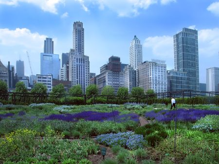 buisiness: Buisiness man walking in a garden in Chicagos Millennium Park Stock Photo