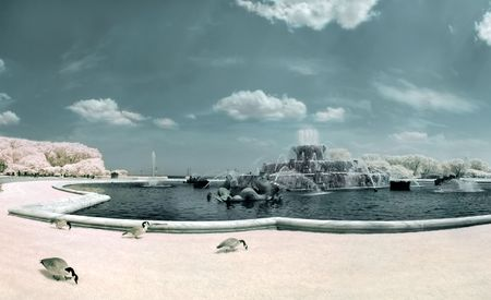 Chicagos Buckingham Fountain  with geese grazing. In infrared. photo