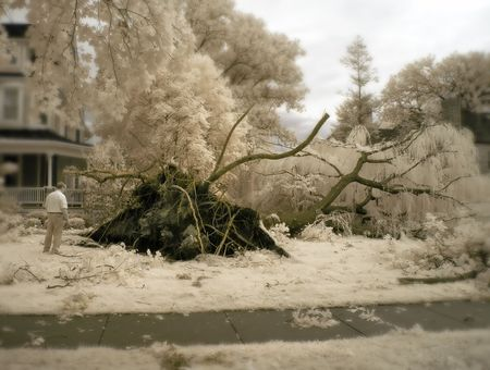 hail: Man looking at a tree damaged from strong winds in a major summer storm. Infrared. Stock Photo
