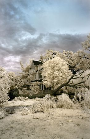 collapsed: Tree damaged from strong winds in a major summer storm. Infrared.