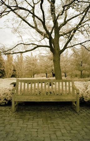 Infrared bench under a tree in the park.