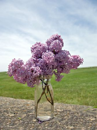 Fresh picked lilacs on an old stone wall in the country. photo