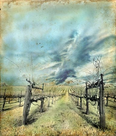 napa valley: Napa Valley vineyard in winter on a grunge background. Infrared. Stock Photo