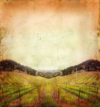 wineries: Napa Valley vineyard sunset on a grunge background. Stock Photo