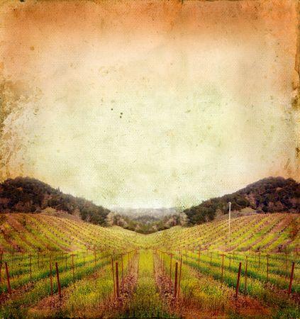 Napa Valley vineyard sunset on a grunge background. Stock Photo