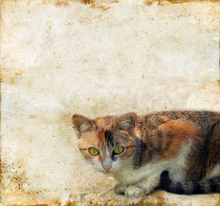 calico cat: Calico cat on a grunge background. Copy-space for your text. Stock Photo