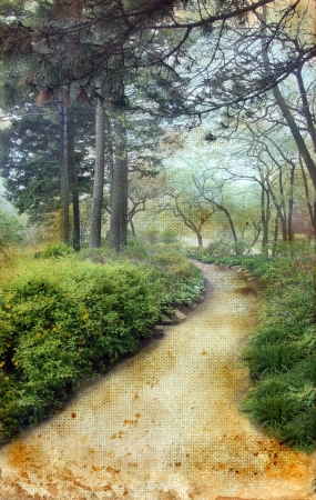 wooded path: Pathway through pine trees on a grunge background.