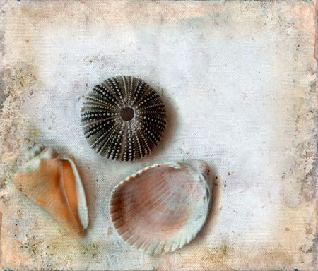 Variety of sea shells on a grunge background. Copy-space for your text. Imagens